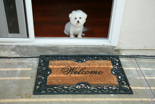 The Dog Trainer Teach Your Dog To Wait At The Door Quick And