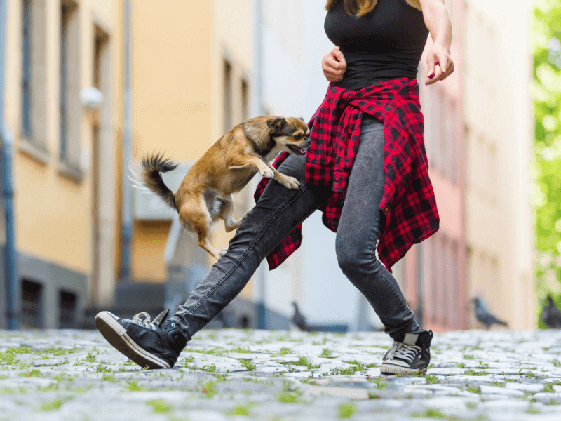 The Dog Trainer What To Do About Your Humping Dog Dog