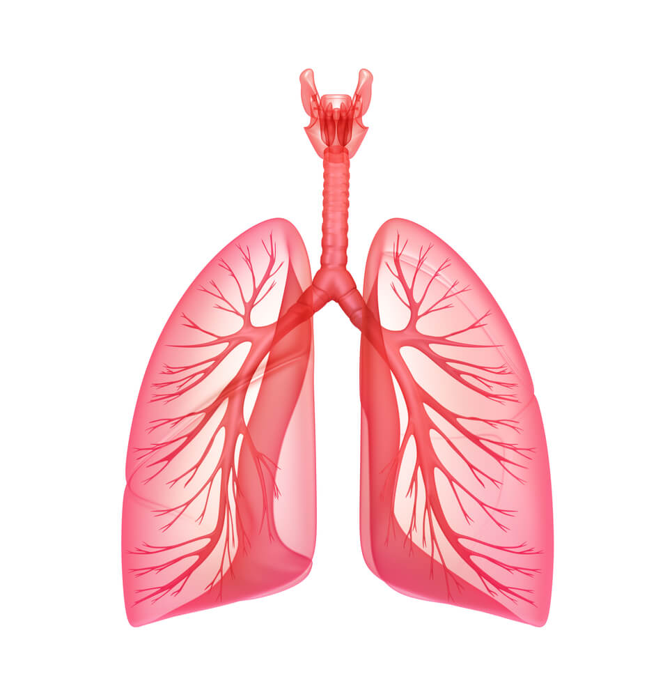 how to increase your lung capacity lungs clip art cystic fibrosis lungs clip art cystic fibrosis