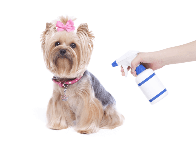 The Dog Trainer Should You Use A Squirt Bottle To Train Your Dog