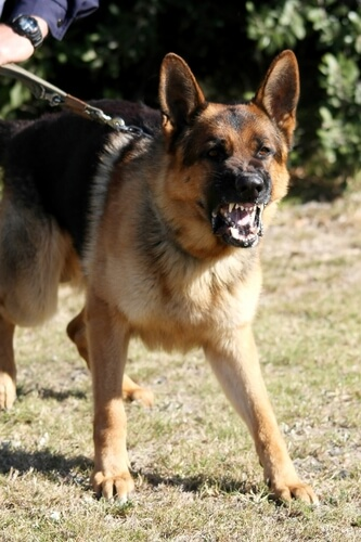 dog fighting videos download free