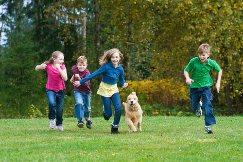 The Dog Trainer Case Study The Child Chasing Terrier