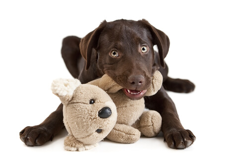 The Dog Trainer How To Get Your Puppy To Stop Chewing