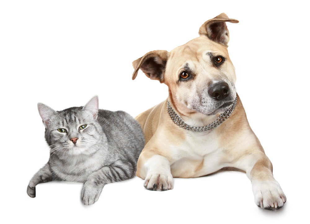 The Dog Trainer How To Keep Your Dog From Chasing Cats Quick And Dirty Tips