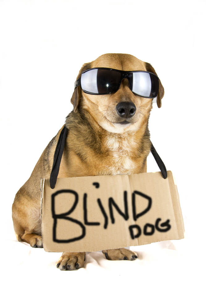 the dog trainer   how to handle a blind dog    quick and