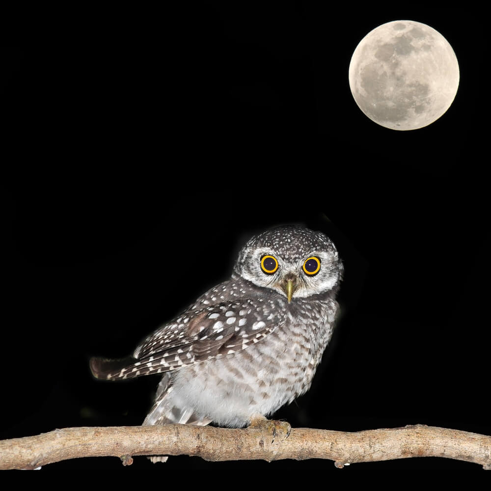 Dating a night owl