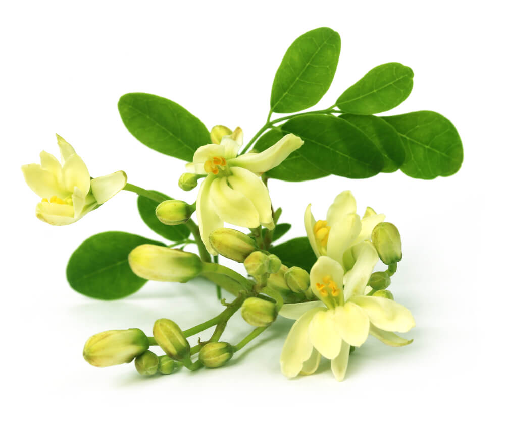 the truth about moringa