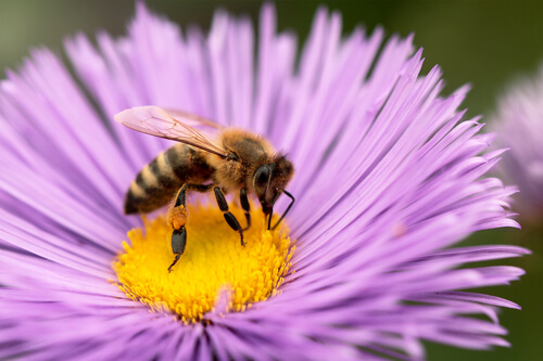 Is Bee Pollen Good For You Part 1