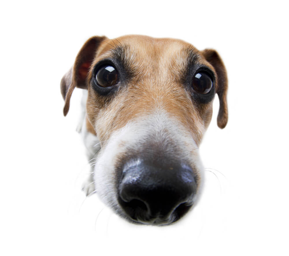 Can Dogs Smell Other Dogs On You