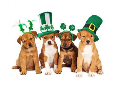 St. Patrick's Day puppies