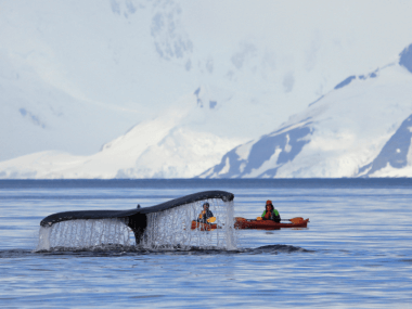 Photo of some kayaks and whales