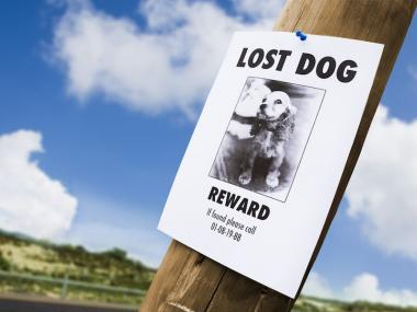 A lost dog flyer