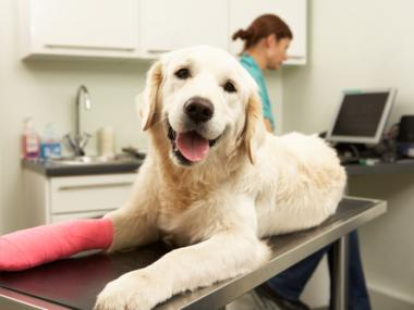 Pet Insurance 5 Tips to Know if You Should Buy It
