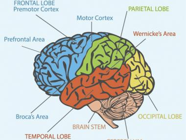 How aphasia causes difficulty speaking. Brain areas.