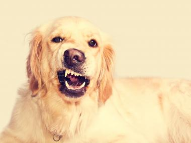 How to Prevent Aggression in Your New Dog or Puppy