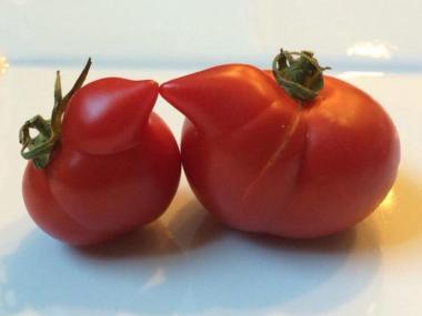 Why You Should Buy Ugly Fruits and Vegetables