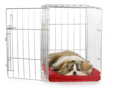 how to teach your dog to love his crate