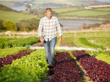 image of farmer walking in lettuce field