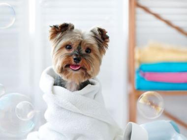 a dog in a towel