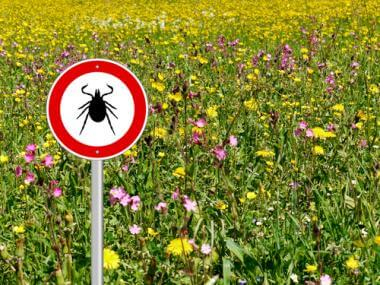 What is Lyme Disease?