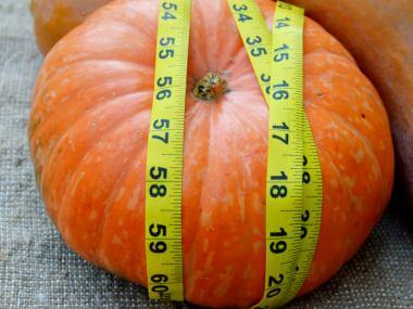 Pumpkin Measuring