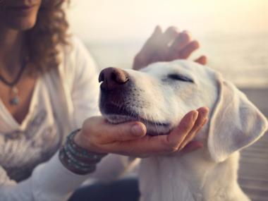 Are Emotional Support Animals Necessary, or Just Glorified Pets?