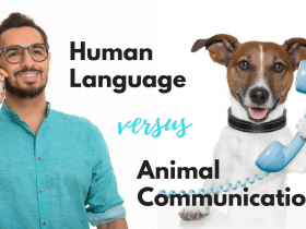 human language or animal communication
