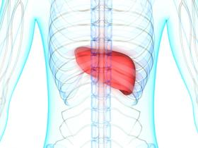 What Can You Do for a Fatty Liver?