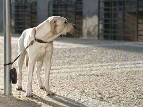 the dog trainer  should you leave your dog tied up while
