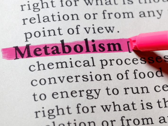 The word metabolism in the dictionary