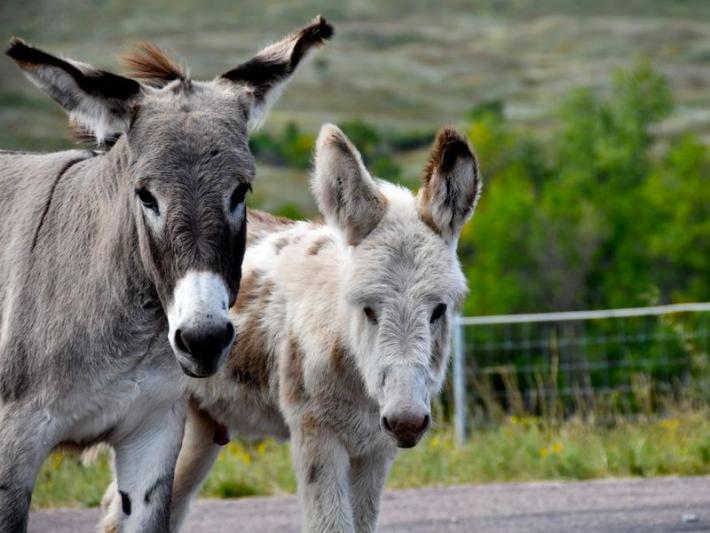 Burros will help you remember how to spell 'bureaucracy'