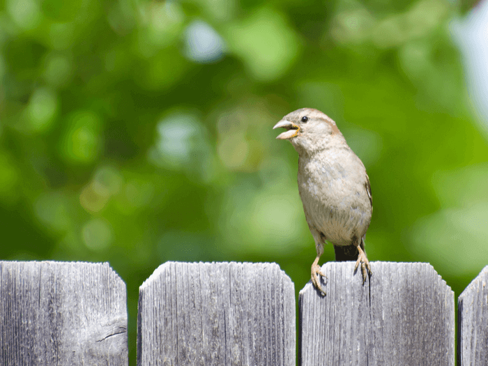 How To Keep Birds Away From Your Patio Pool And Garden