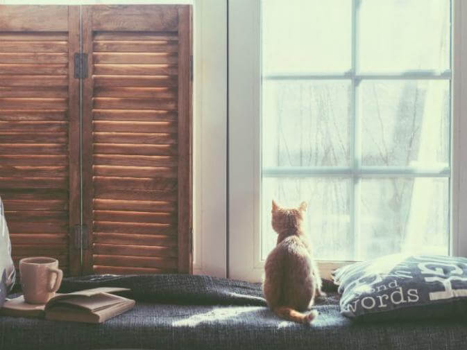 image of a calm home with a cat by a window