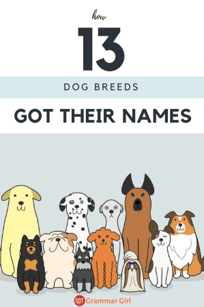 How 13 dog breeds got their names