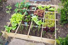 Domestic CEO How to Make a Vegetable Garden in a Small Space